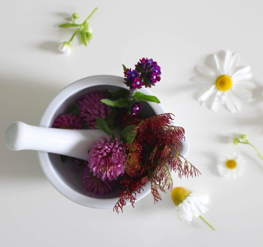medicinal-flower-4246073_1774x1669px-min